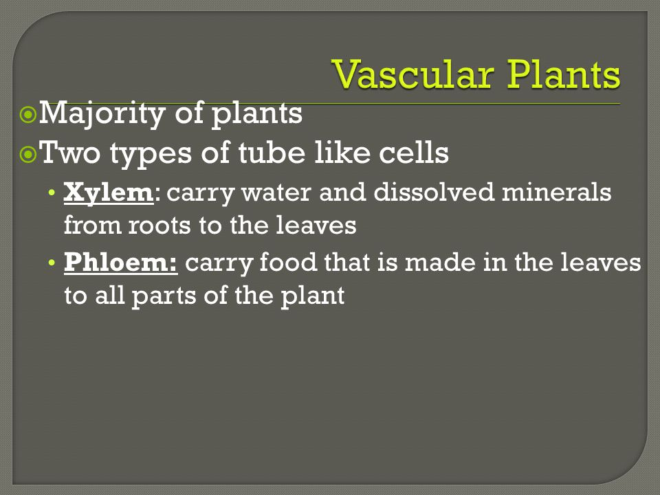Vascular Plants Majority of plants Two types of tube like cells