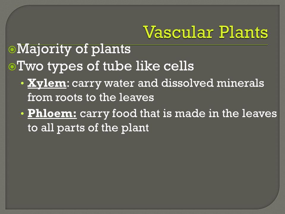 Vascular Plants Majority of plants Two types of tube like cells