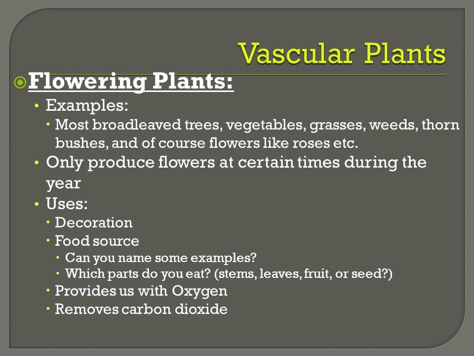 Vascular Plants Flowering Plants: Examples: