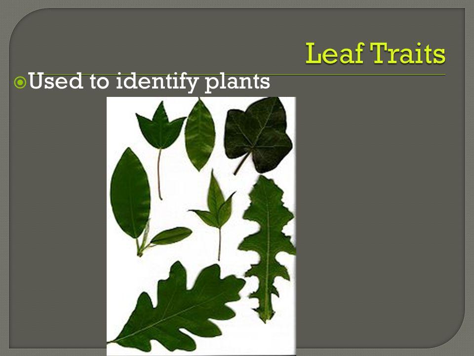 Leaf Traits Used to identify plants