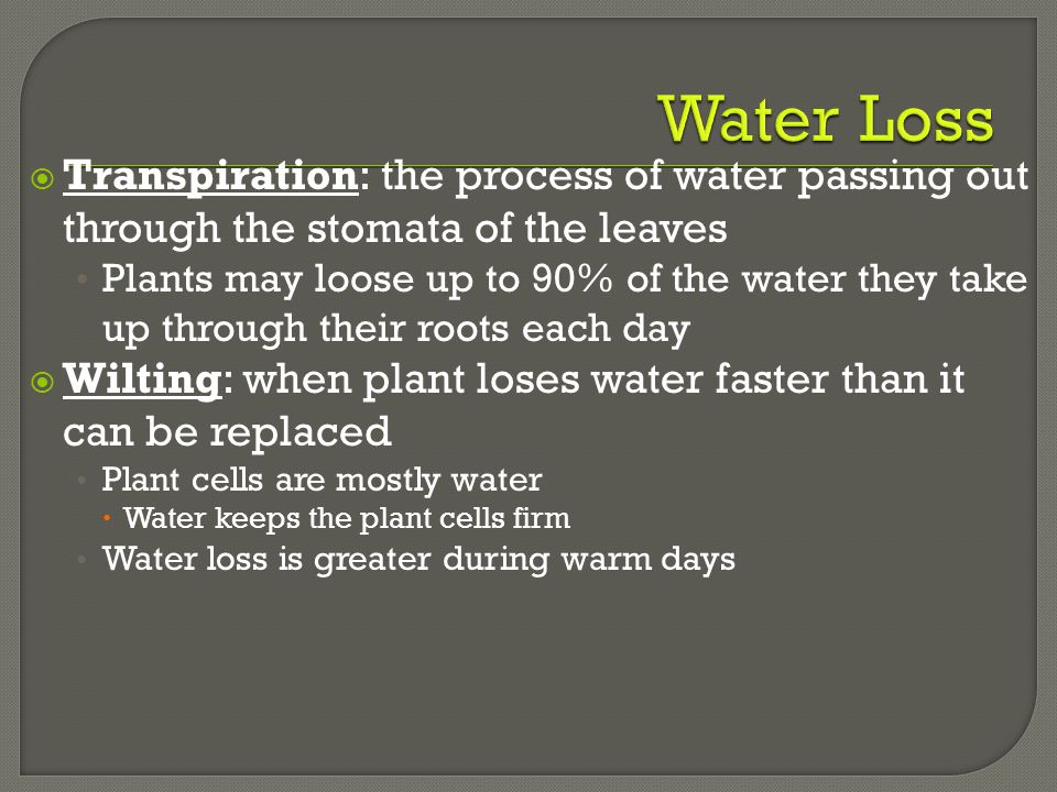 Water Loss Transpiration: the process of water passing out through the stomata of the leaves.
