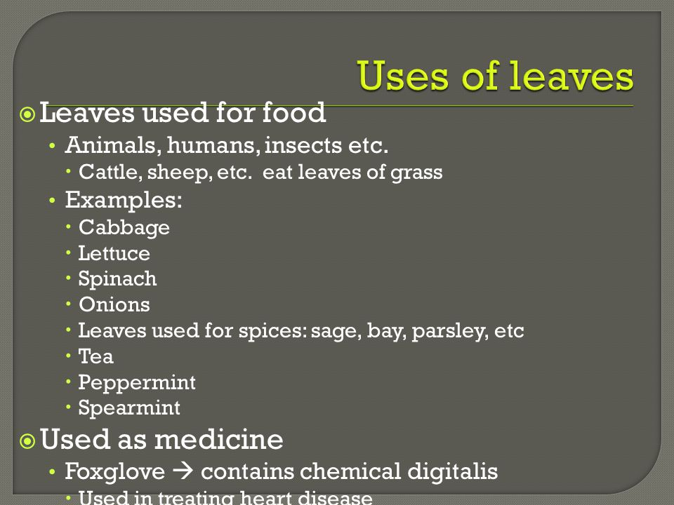 Uses of leaves Leaves used for food Used as medicine