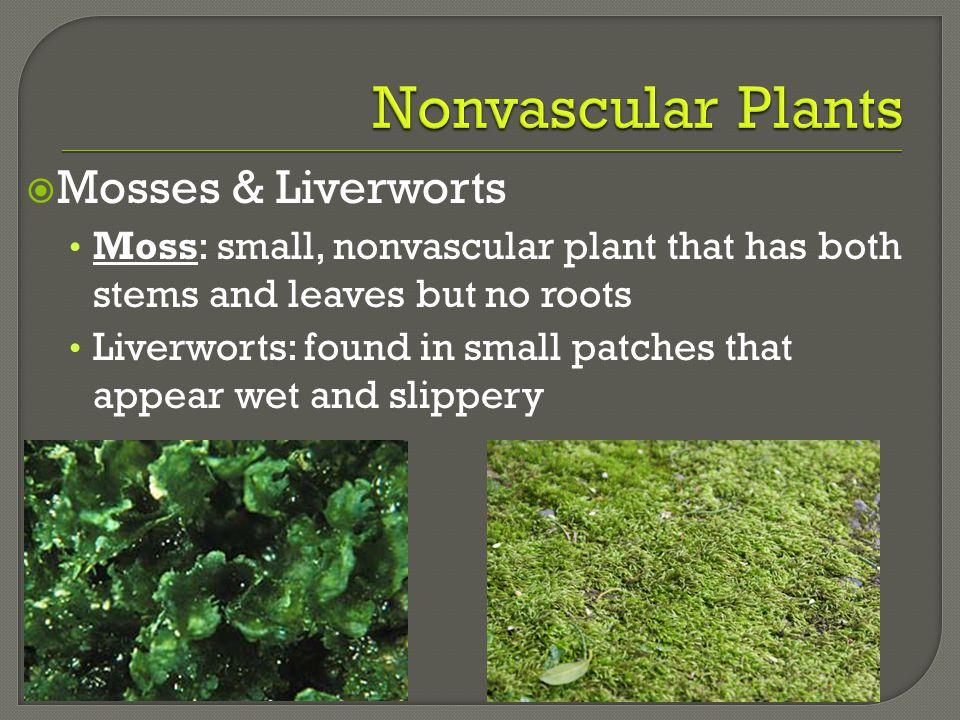 Nonvascular Plants Mosses & Liverworts