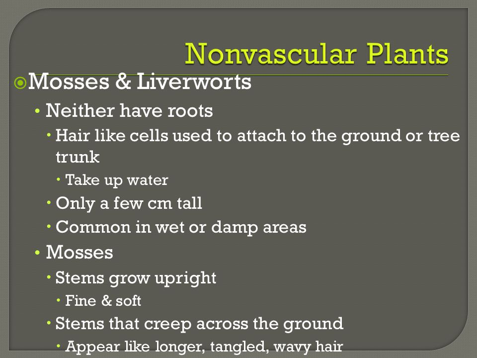 Nonvascular Plants Mosses & Liverworts Neither have roots Mosses