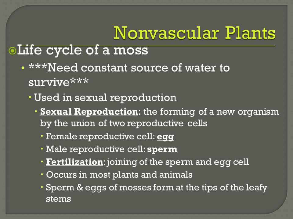 Nonvascular Plants Life cycle of a moss