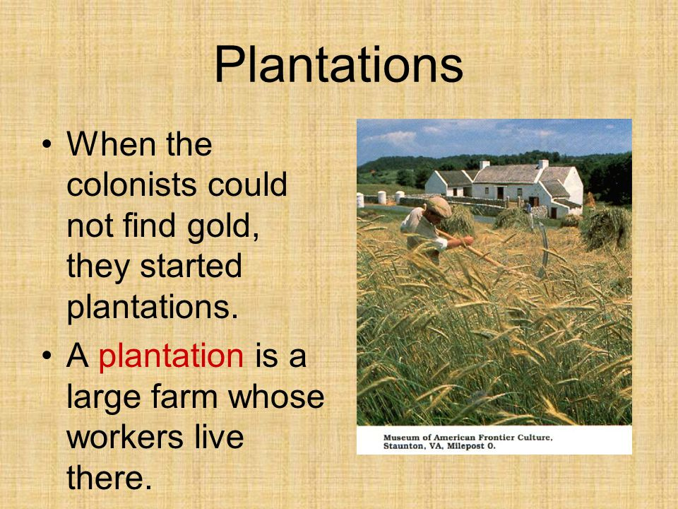 Plantations When the colonists could not find gold, they started plantations.
