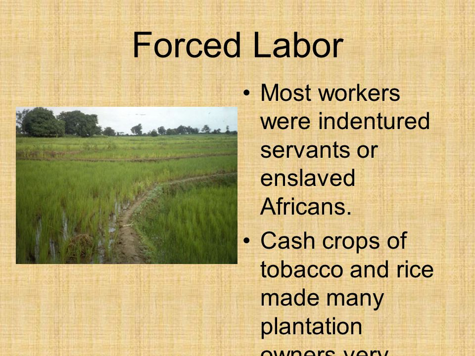 Forced Labor Most workers were indentured servants or enslaved Africans.