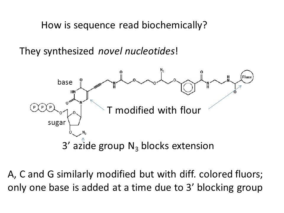 How is sequence read biochemically
