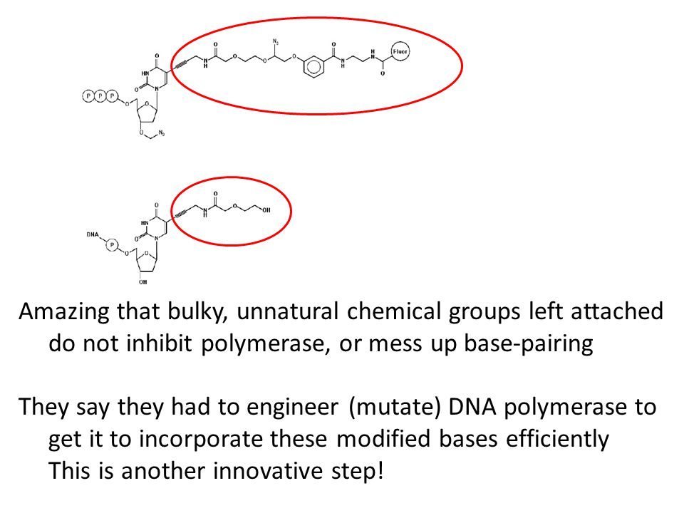 Amazing that bulky, unnatural chemical groups left attached