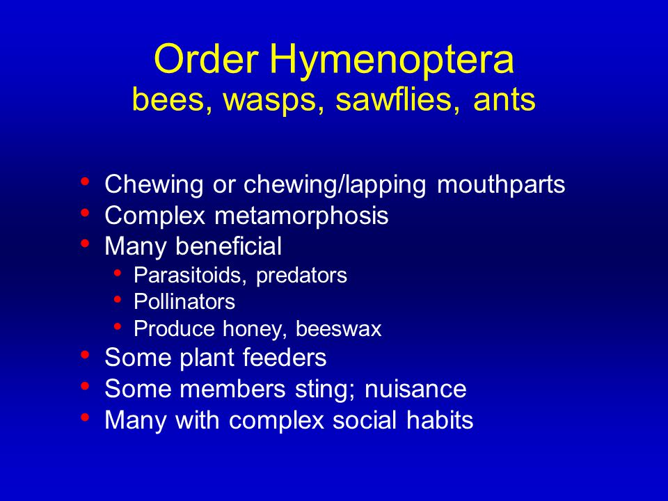 Order Hymenoptera bees, wasps, sawflies, ants