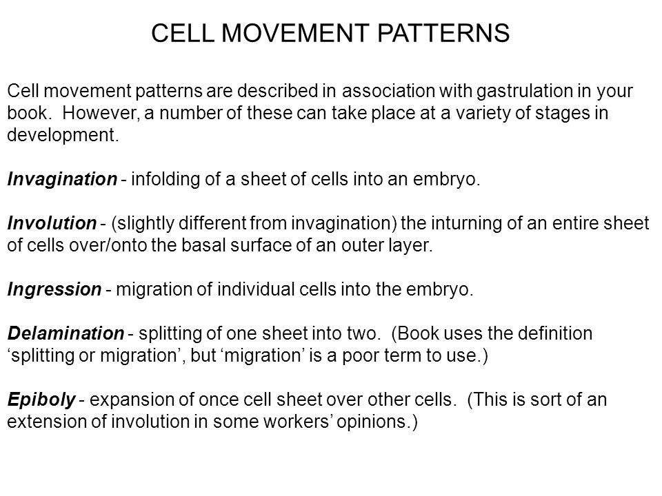 CELL MOVEMENT PATTERNS