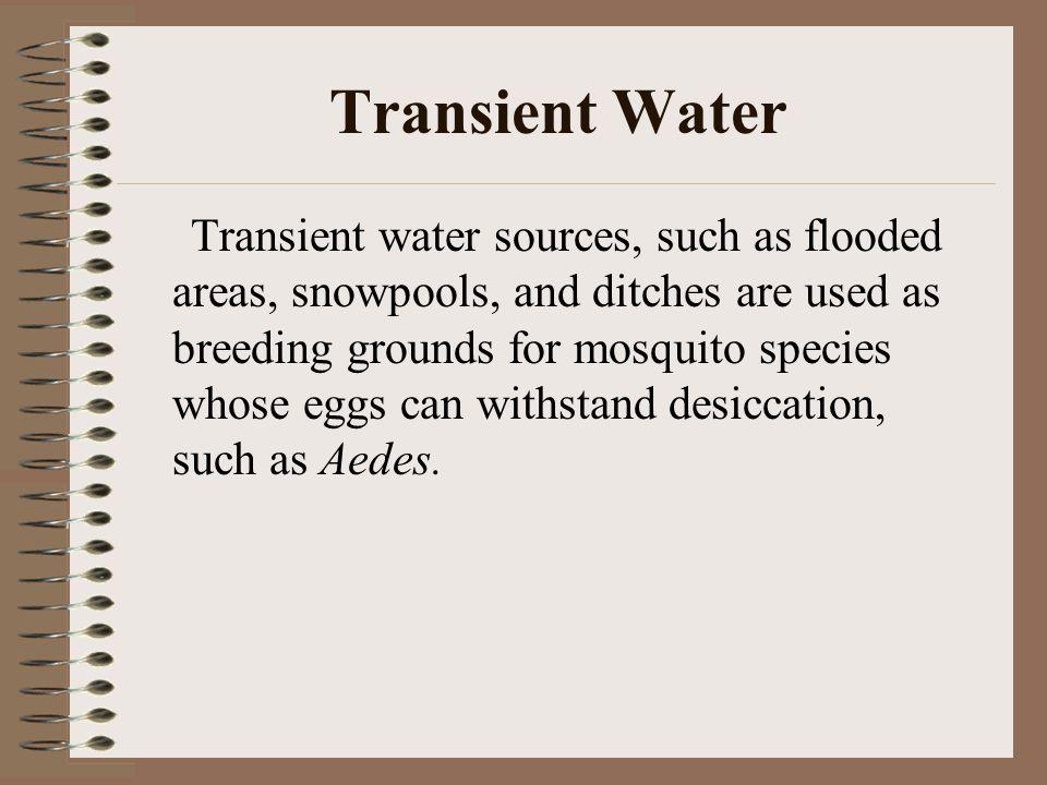 Transient Water