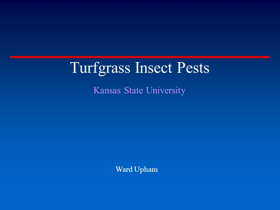 Turfgrass Insect Pests