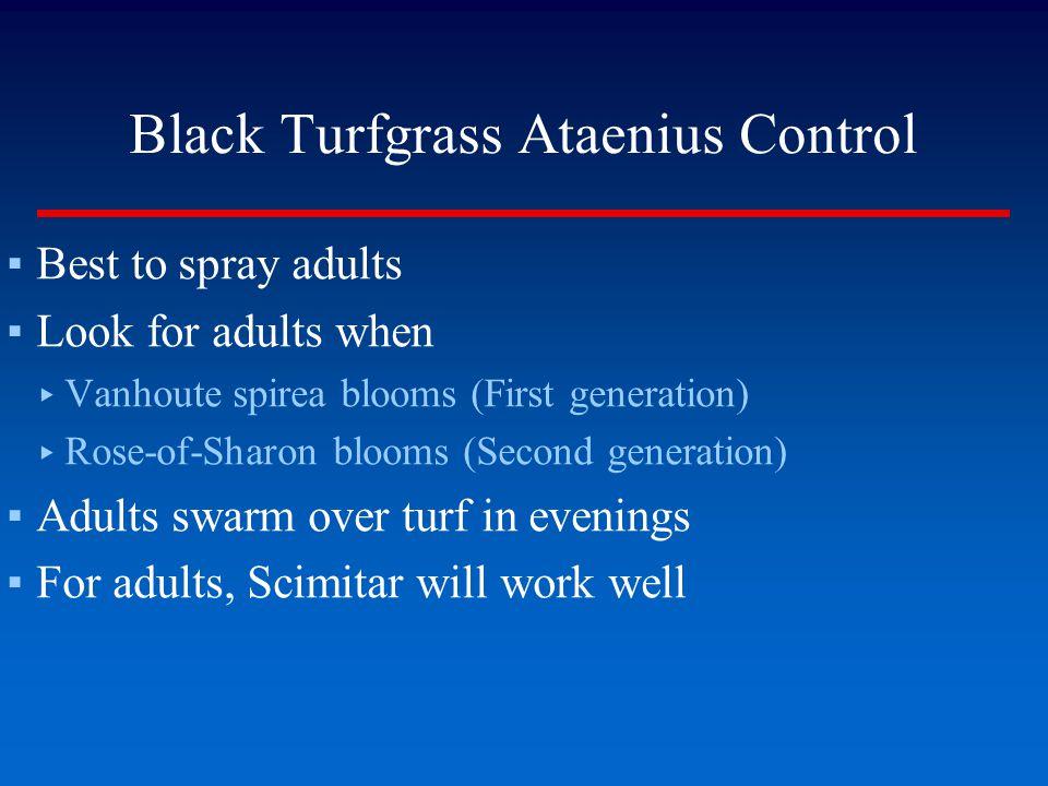 Black Turfgrass Ataenius Control