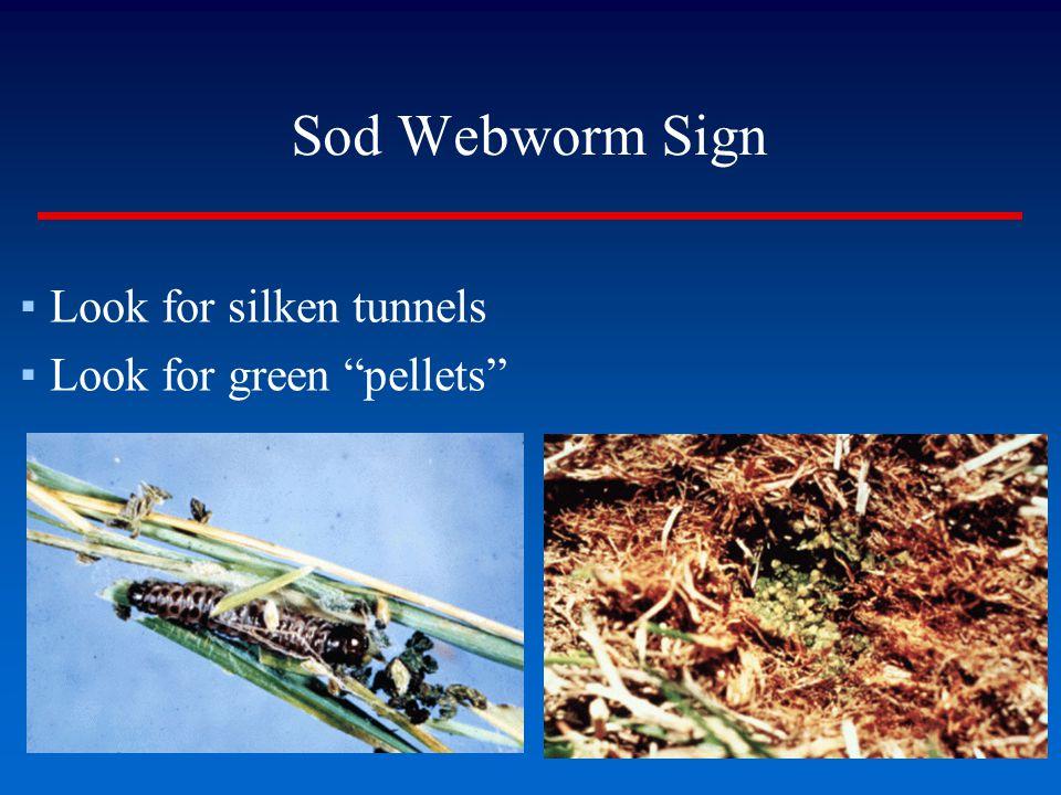 Sod Webworm Sign Look for silken tunnels Look for green pellets