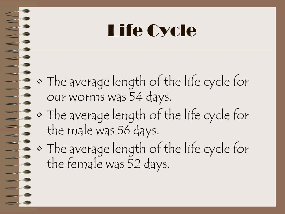 Life Cycle The average length of the life cycle for our worms was 54 days. The average length of the life cycle for the male was 56 days.