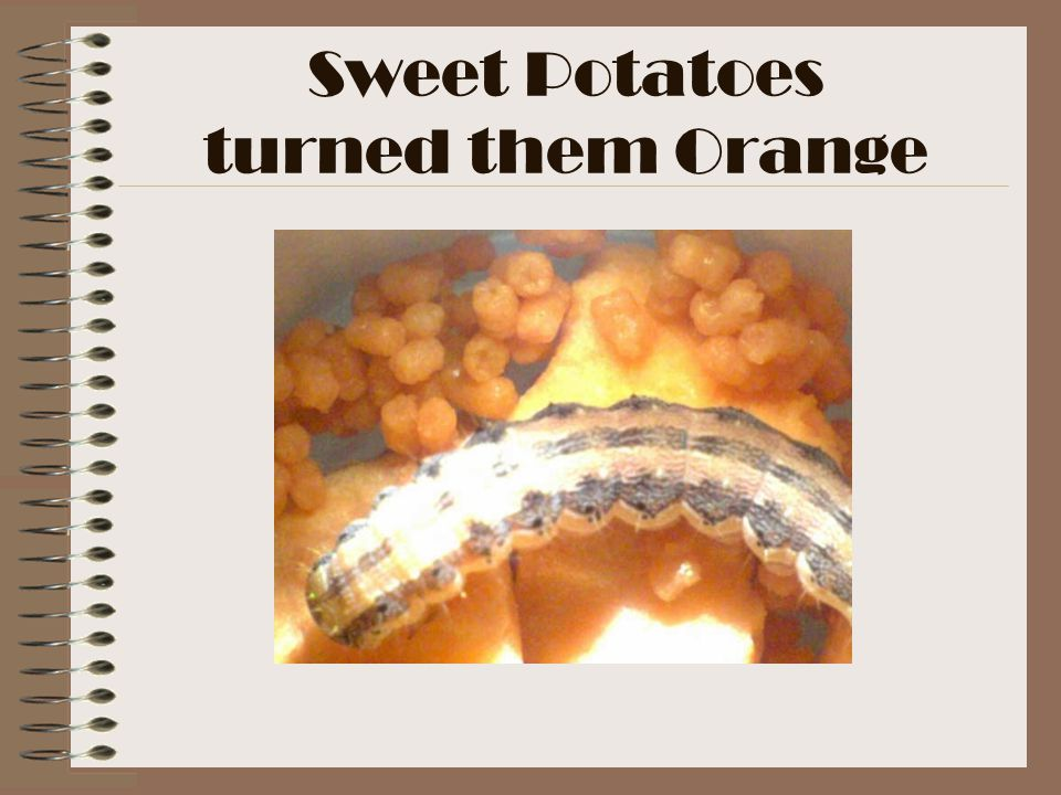 Sweet Potatoes turned them Orange
