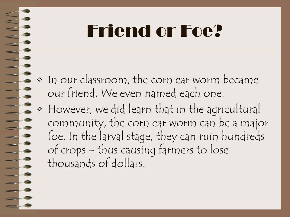 Friend or Foe In our classroom, the corn ear worm became our friend. We even named each one.