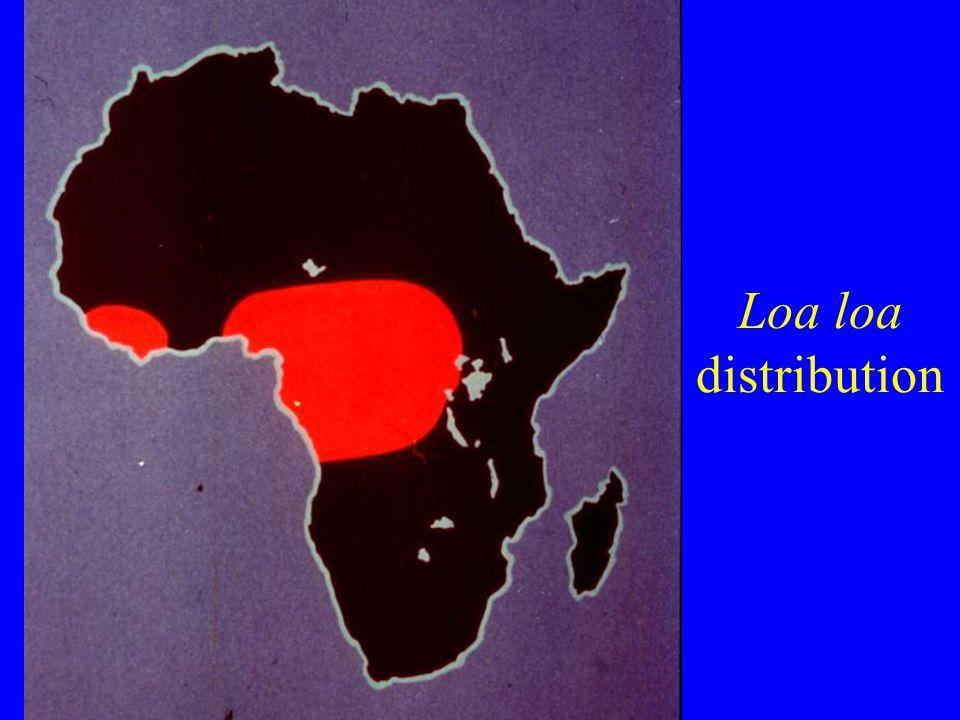 Loa loa distribution