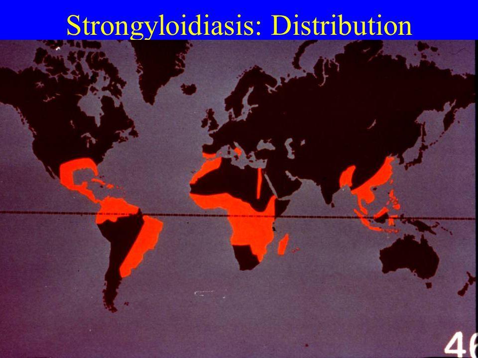 Strongyloidiasis: Distribution