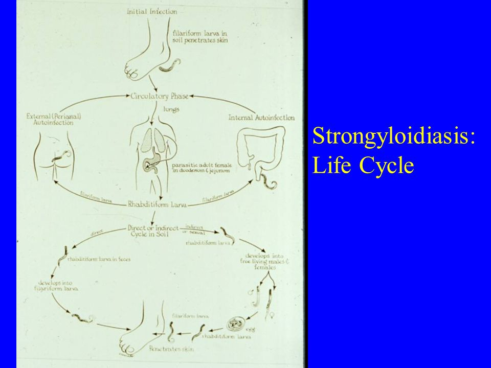 Strongyloidiasis: Life Cycle