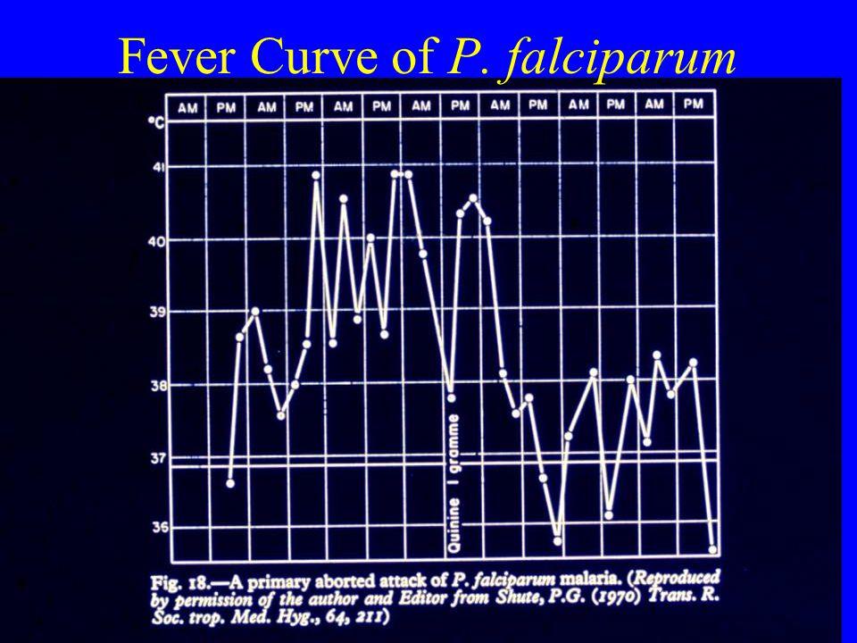 Fever Curve of P. falciparum