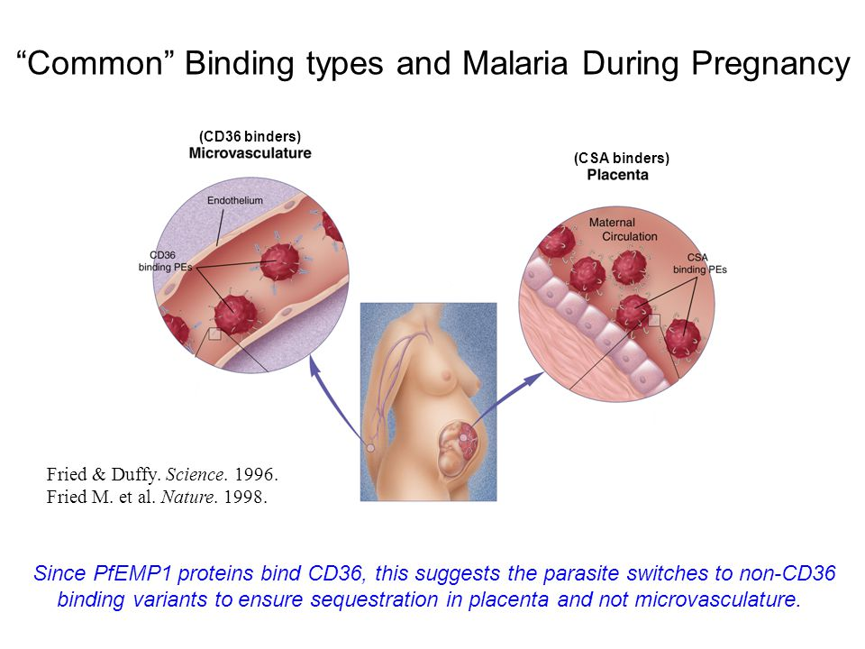 Common Binding types and Malaria During Pregnancy