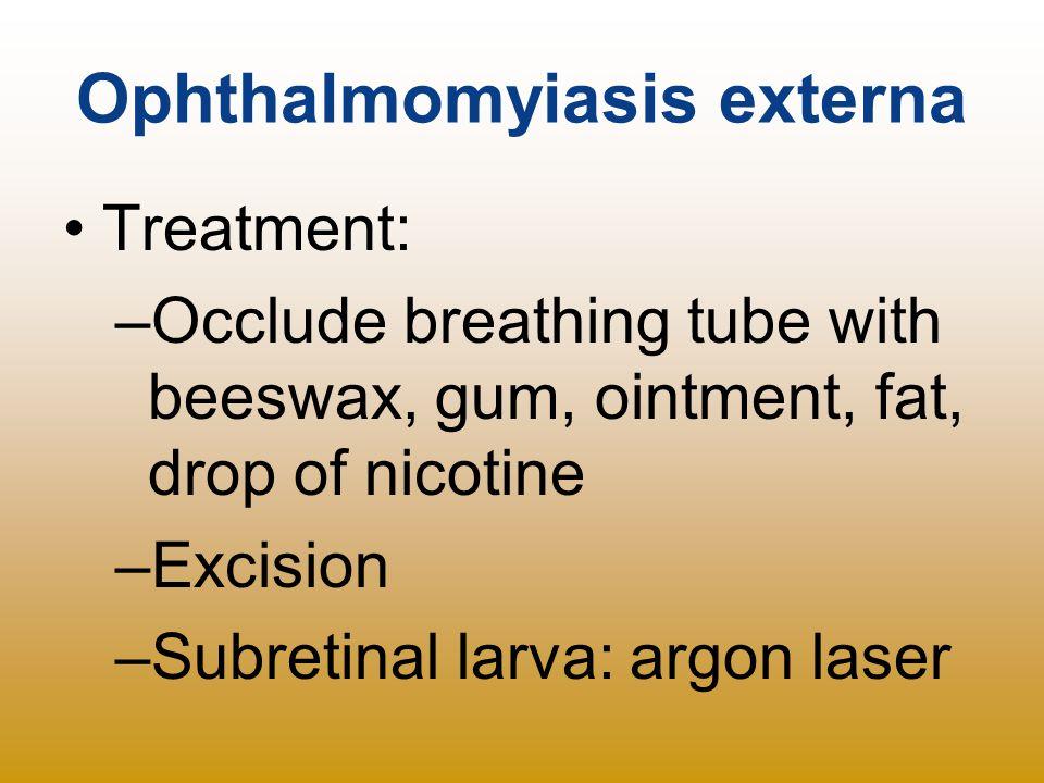 Ophthalmomyiasis externa