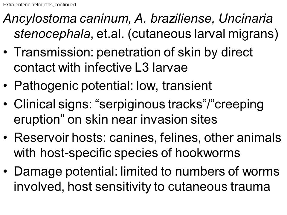 Pathogenic potential: low, transient