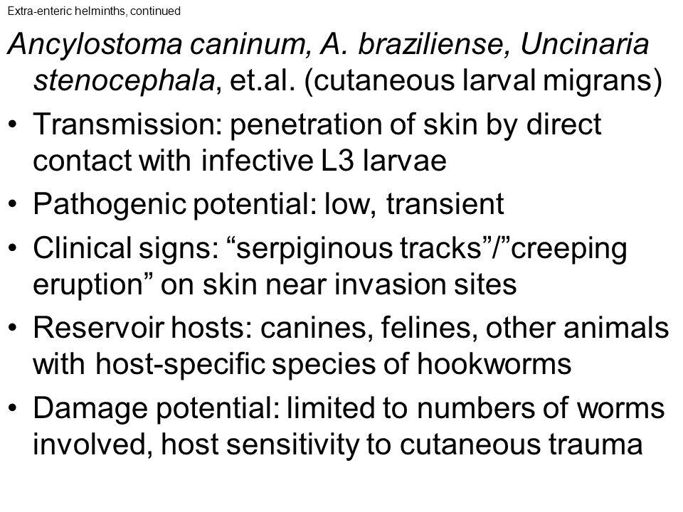 Pathogenic potential: low, transient