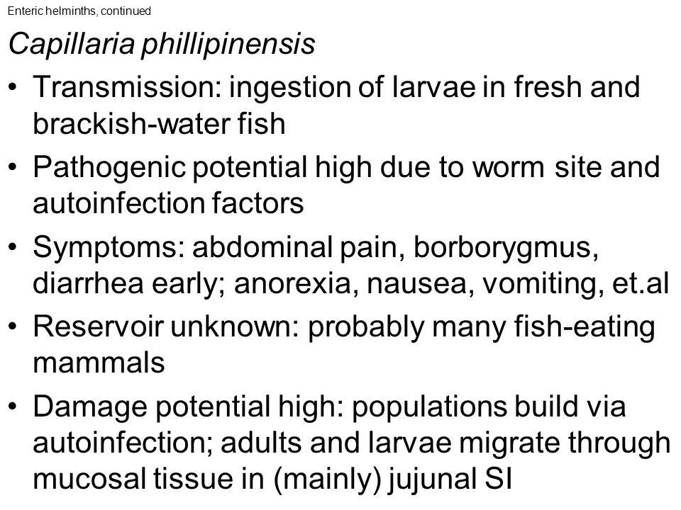 Capillaria phillipinensis