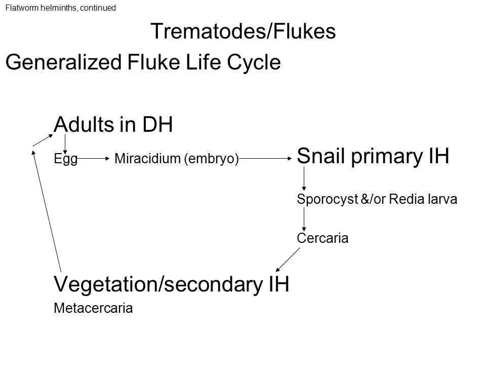 Generalized Fluke Life Cycle Adults in DH