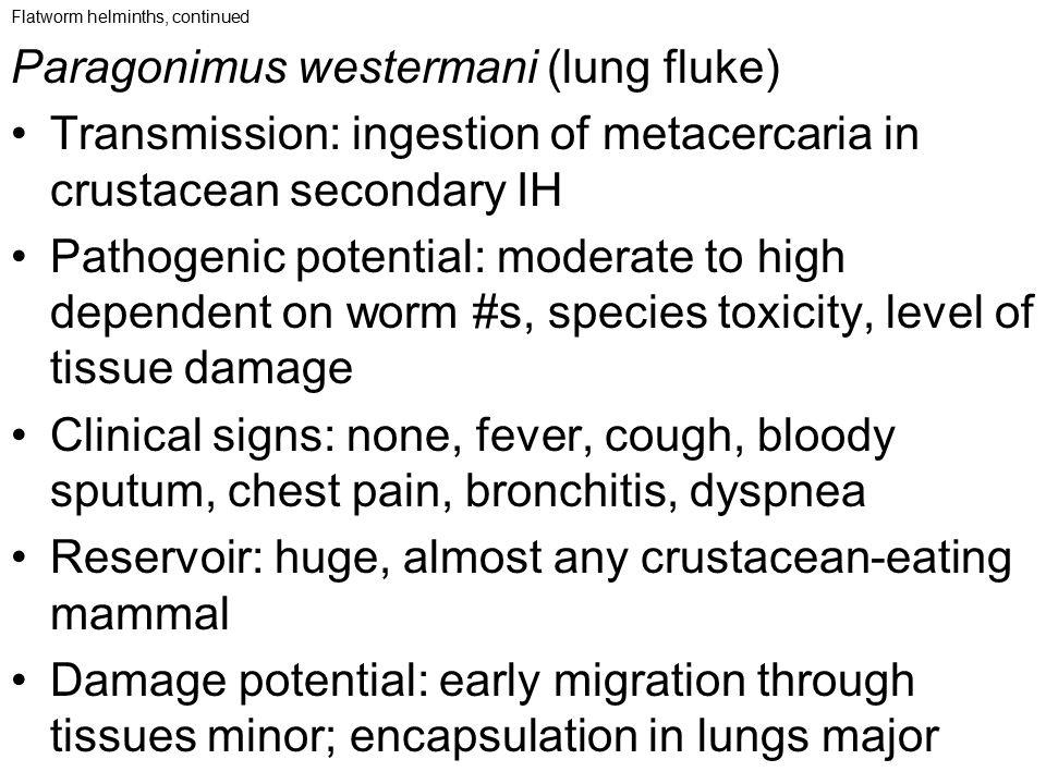 Paragonimus westermani (lung fluke)
