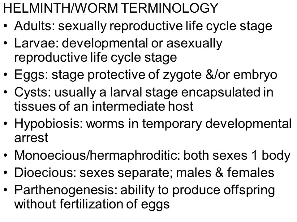 HELMINTH/WORM TERMINOLOGY