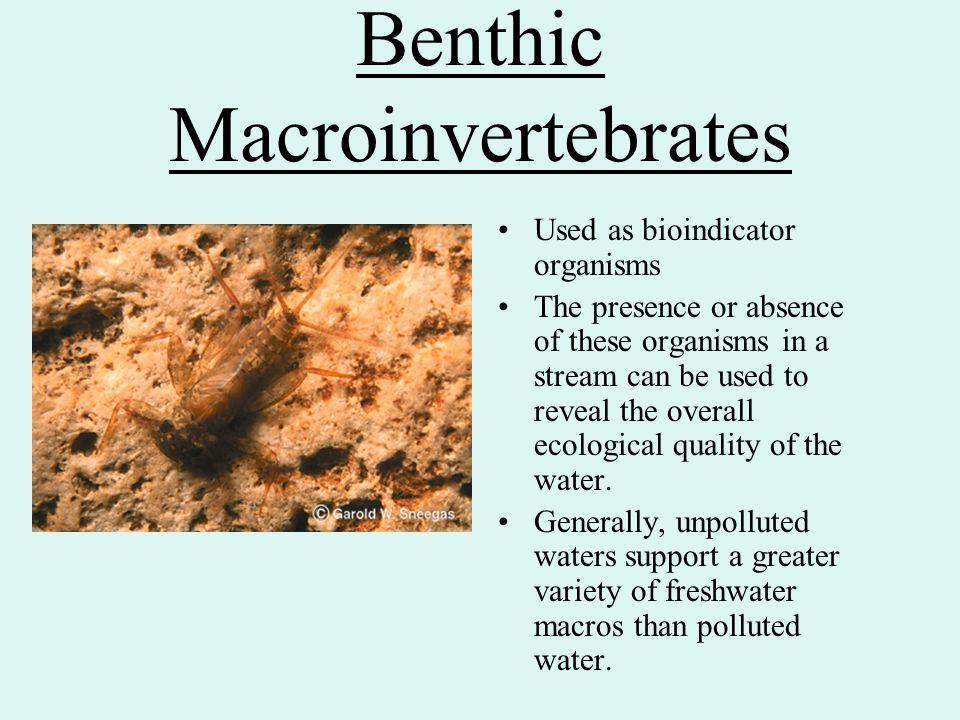 Benthic Macroinvertebrates