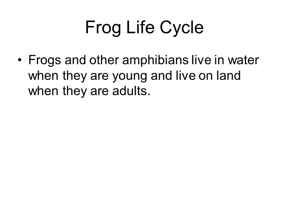 Frog Life Cycle Frogs and other amphibians live in water when they are young and live on land when they are adults.