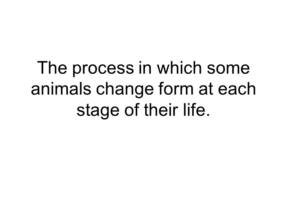 The process in which some animals change form at each stage of their life.