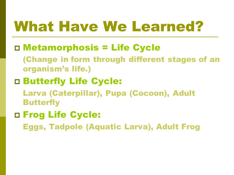 What Have We Learned Metamorphosis = Life Cycle Butterfly Life Cycle: