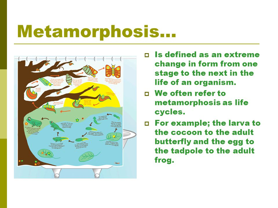 Metamorphosis… Is defined as an extreme change in form from one stage to the next in the life of an organism.