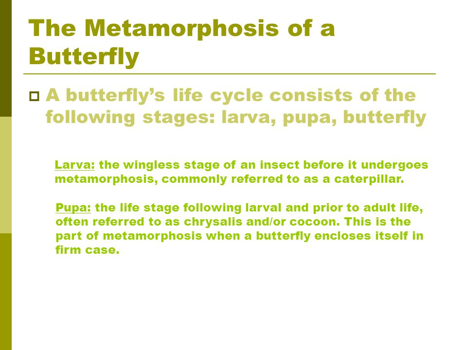 The Metamorphosis of a Butterfly