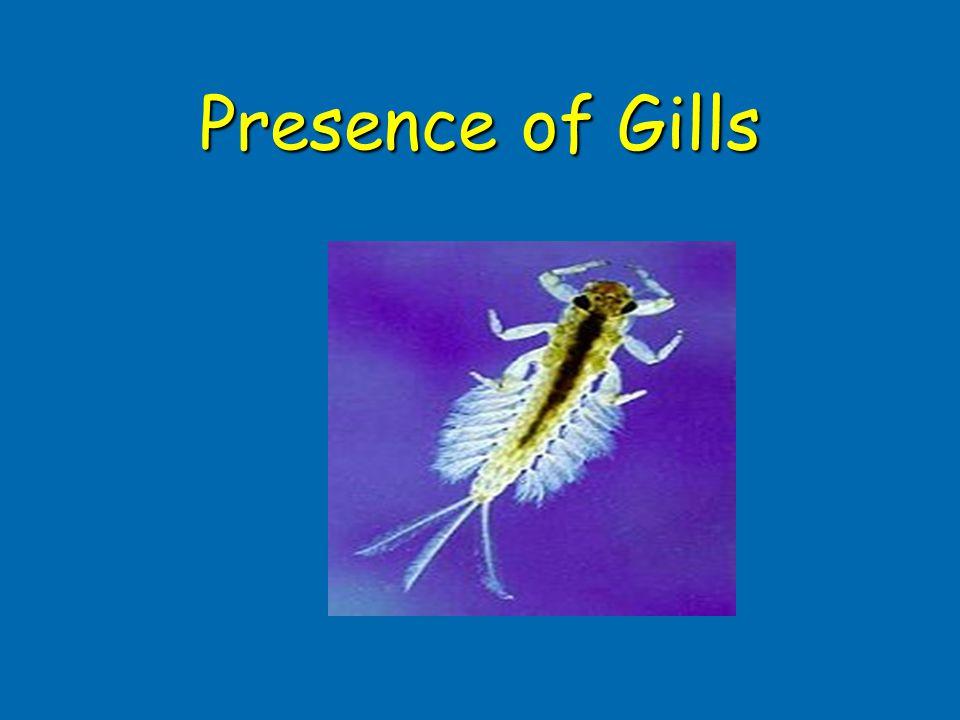Presence of Gills