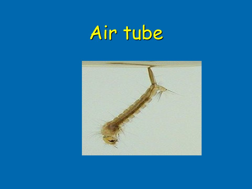Air tube