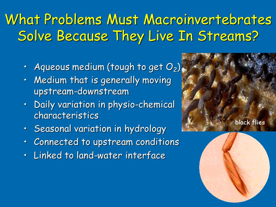 What Problems Must Macroinvertebrates Solve Because They Live In Streams