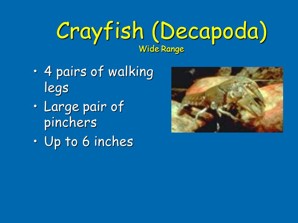 Crayfish (Decapoda) Wide Range