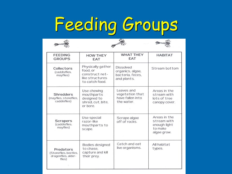 Feeding Groups