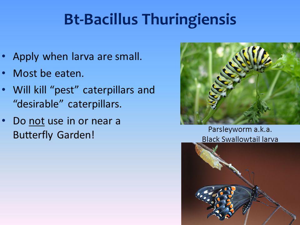 Bt-Bacillus Thuringiensis