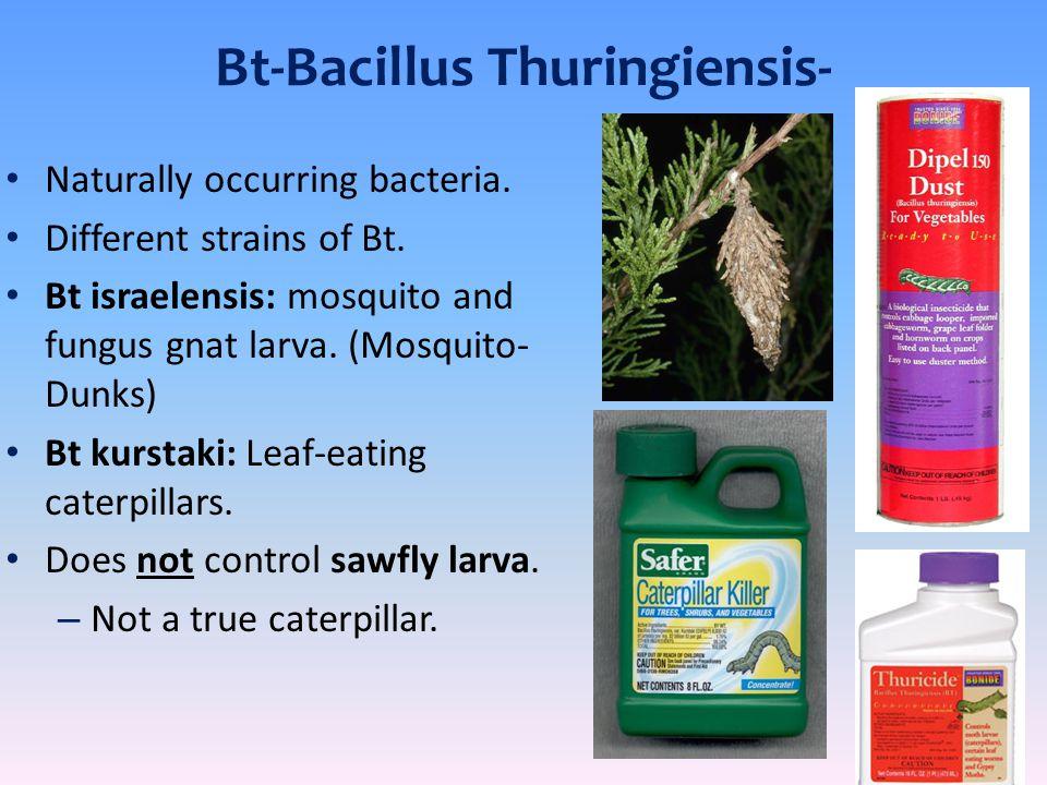 Bt-Bacillus Thuringiensis-