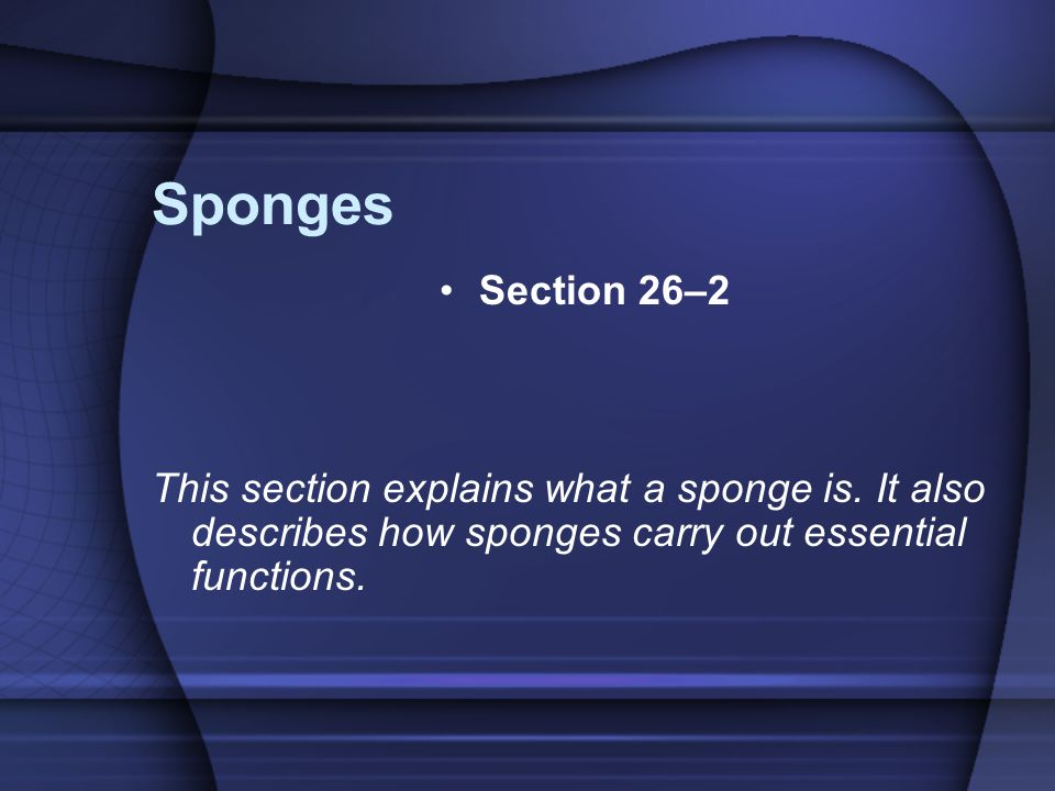 Sponges Section 26–2. This section explains what a sponge is.