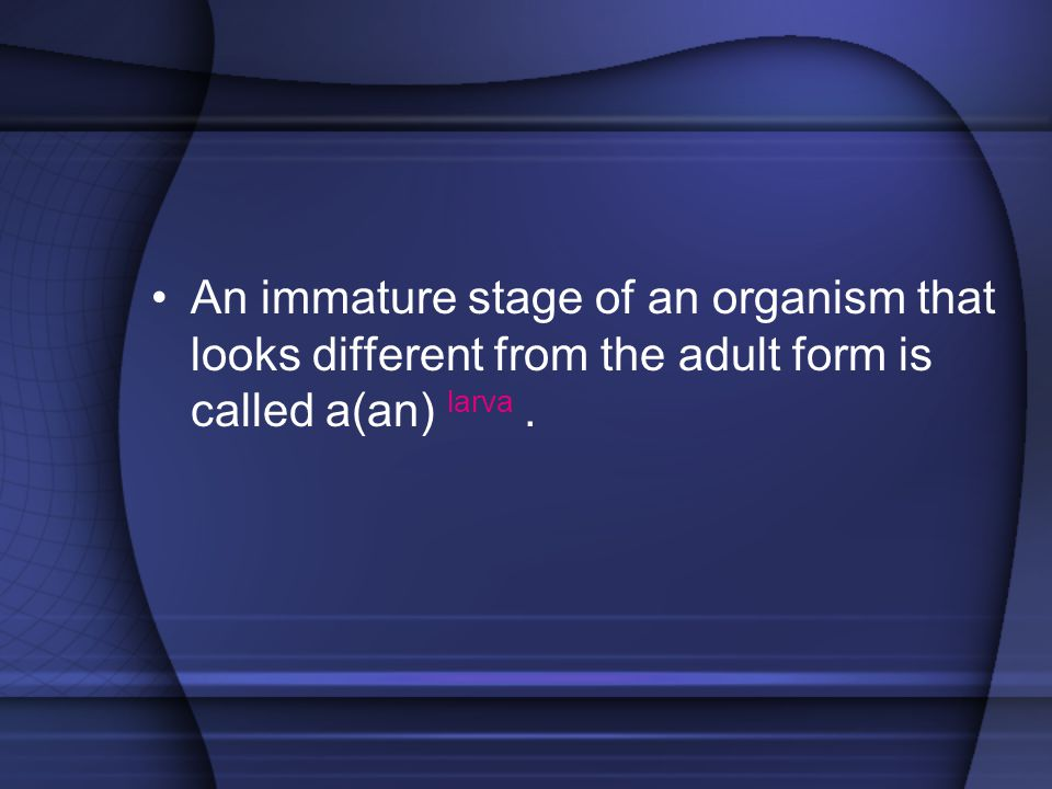 An immature stage of an organism that looks different from the adult form is called a(an) larva .