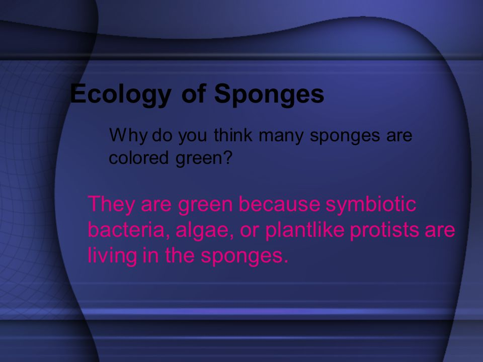 Ecology of Sponges Why do you think many sponges are colored green